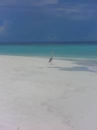 constance halaveli beach