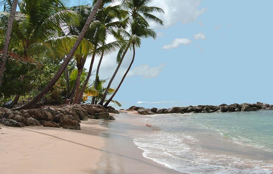 caribbean beach art exhibition