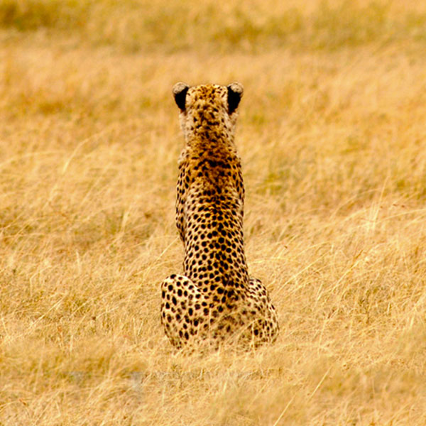 Kenya - Places to Go